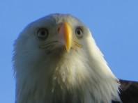 A nice close up.